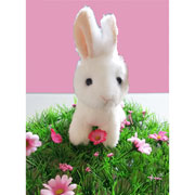 Little White Rabbit Soft Toy